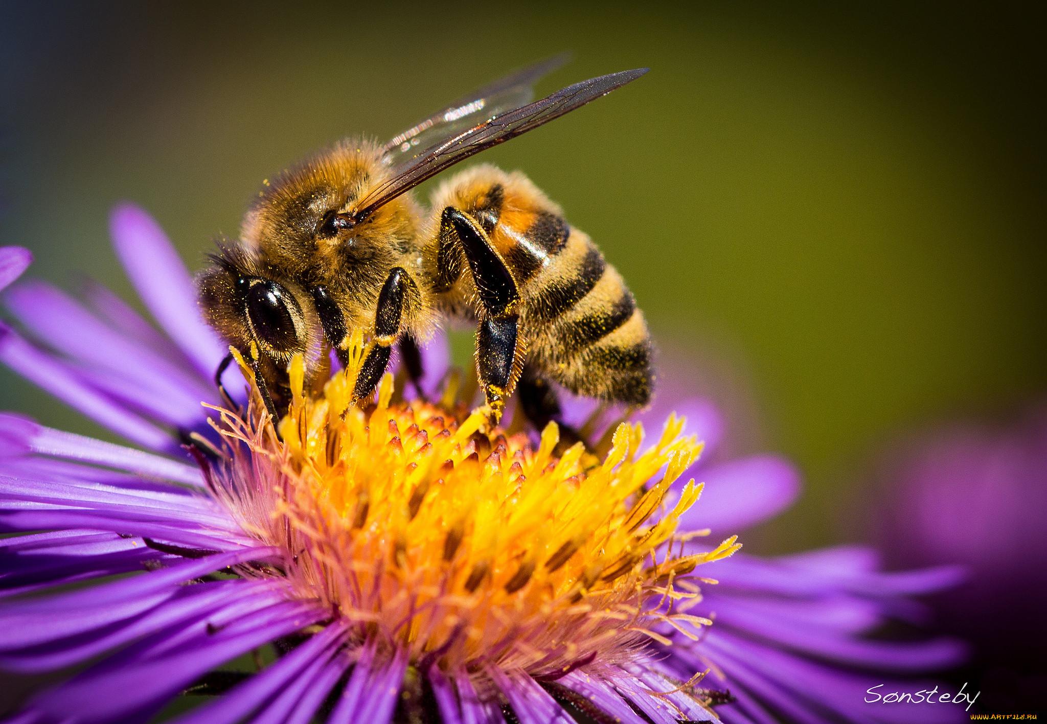 картинки пчела на цветочке работы
